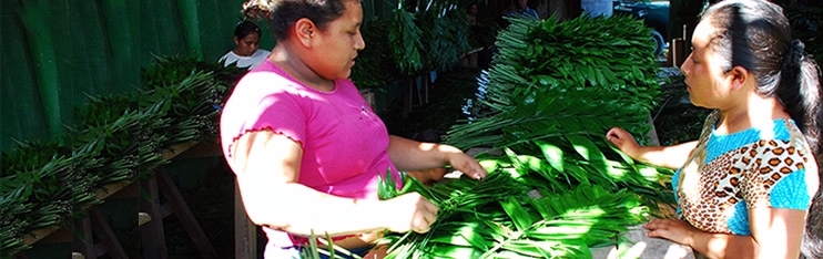 http://servicesaws.iadb.org/wmsfiles/images/742x234/banner-microcredit-2952.jpg